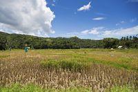 Typical Landscape on Bohol Island