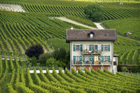 Villa in vineyards,Féchy, Vaud, Switzerland