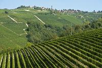 Der Weinbauort Treiso