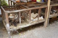 Hühner und Enten zum Verkauf auf einem Markt in Seririt, Nordbal