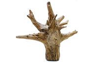 Driftwood tree stump