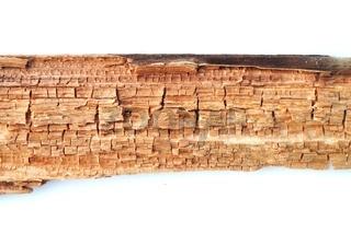 Holz mit Würfelbruch durch Pilzbefall