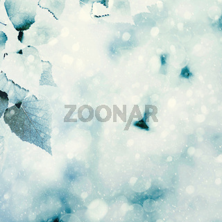 Frozen summer. Natural winter backgrounds with beauty bokeh