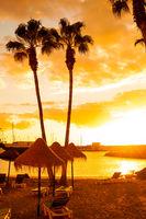 Palm Trees on Tropical Beach