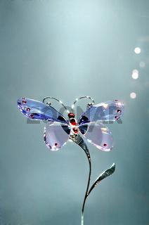 swarovski butterfly.jpg