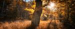 Morgenlicht im Lusenwald