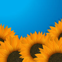 Sunflowers over blue