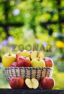Organic apples in the garden. Balanced diet.