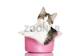 Katze im Zylinderhut
