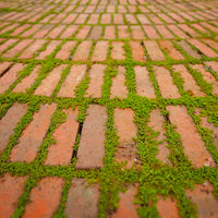Creepers Growing Around the Edges of Brick Pavers