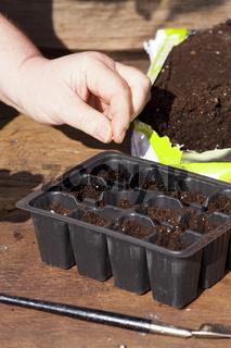 Hand gibt Samen von Kräutern in Erde