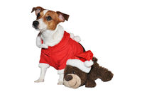 Christmasdog