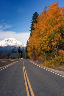 Autumn Finds Foliage Rural Road McCloud California Mount Shasta