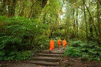 Buddhist monks in tropical rain forest. Thailand