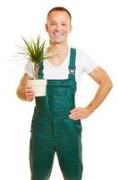Florist mit einer Pflanze in der Hand
