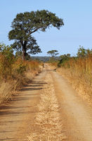 dirt road at Kruger National Park, South Africa