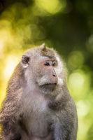 Monkey at Monkey Forest