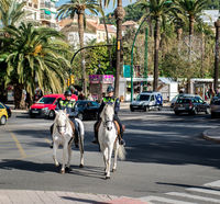 Malaga, Spain - December 30, 2013: Mounted police patrol at Malaga street. Andalusia, Spain