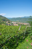 Wine Willage of Tramin,South Tyrol,Italy