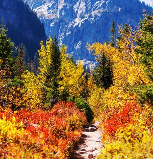 Autumn in Grand Teton