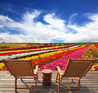 Commercial cultivation of flowers for sale abroad