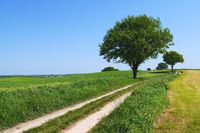 Dirt road in East Holstein, Germany