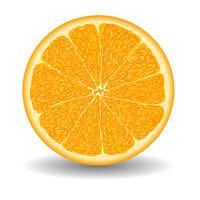 oranges slice over white vector illustration