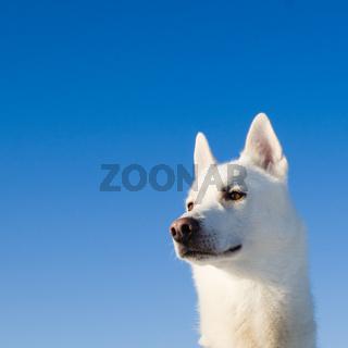 Portrait of a white dog