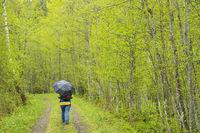 Green forest in spring, Austria, Europe