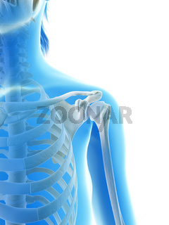 rendered illustration of the shoulder joint