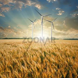 Wind generators turbines on wheat field
