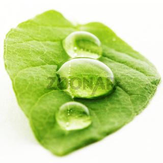 Water drop on leaf macro