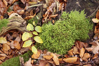 Moss and autumn leaves