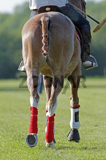 Pferdepfleger sitzt auf einem Polo-Pony