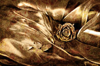 Vintage background: Dry rose on satin. Gold colored image, shallow depth of field