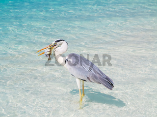 Bird holding fish in sea