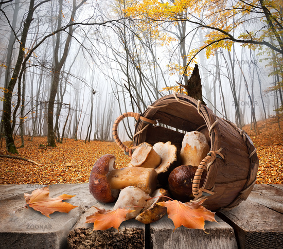 Mushrooms and autumn forest