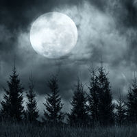 Magic landscape with pine tree forest under dramatic cloudy sky at full moon mysterious night