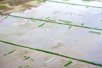 Fermers works at rice fields. Ninh Binh, Vietnam