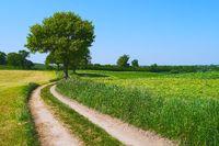 Schleswig-Holstein Uplands