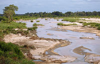 landscape near Skukuza at Kruger National Park