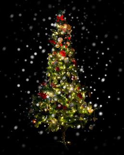 beautiful decorated and illuminated christmas tree