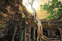 Ta Prohm temple with giant banyan tree at sunset