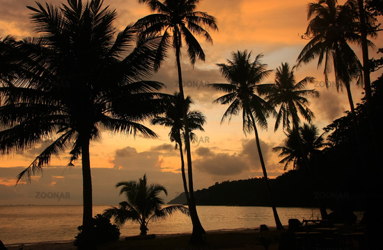 Tropical beach with palm trees at sunrise, Wua Tal
