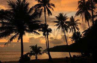 Tropical beach with palm trees at sunrise, Ang Thong National Marine Park, Thailand