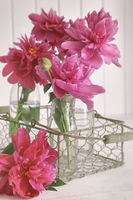 Closeup of pink peony flowers in bottles