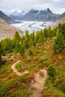 Aletsch Forest and Aletsch Glacier, Switzerland