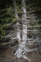 Eerie tree in the dark forest