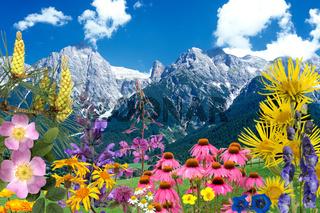 Heilpflanzenarrangement, Heilpflanzen, Berge