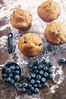 Homemade blueberry muffins on baking rack